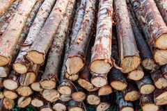 Wood logs showing natural discoloration Royalty Free Stock Photos