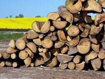 Wood Logs Split and Stacked. A pile of wood logs split and stacked outdoors Stock Photos