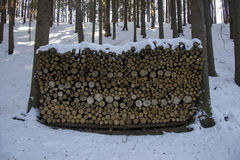 Wood logs stack stored during winter Royalty Free Stock Photography