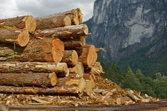 Wood Logs Stock Pile Stock Images