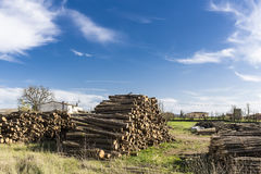 Wood logs stored on a factory on an outdoor scene blue sky Royalty Free Stock Image