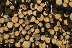 Wood logs in sun Stock Image