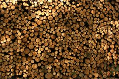Wood logs with a sunlight through trees stock photo