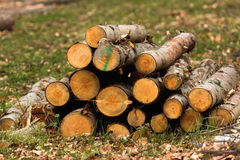 Wood logs texture / background Stock Photography