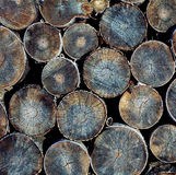 Wood logs texture Stock Images