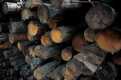 Wood logs Stock Photography