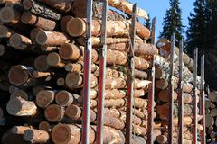 Wood Logs on Truck Trailer Stock Image