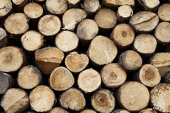 Wood logs waiting for the winter Royalty Free Stock Images