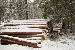 Wood Logs in Winter Forest Stock Photo