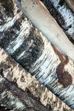 Wood logs Royalty Free Stock Image