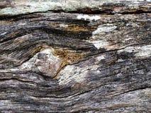 Wood look like eye. Royalty Free Stock Photo