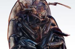 Wood louse royalty free stock images