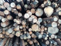 Wood låsmaterielbackround Royaltyfri Fotografi