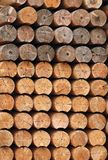 Wood for lumber mill. Raws of logs in stack of lumber mill Royalty Free Stock Photos