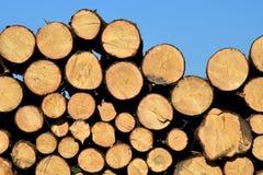 Wood, Lumber, Tree Royalty Free Stock Image