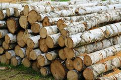 Wood, Lumber, Tree, Trunk stock images