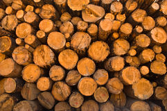 Wood, Lumber & Trees Stock Images