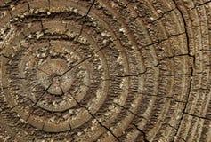 Wood Macro Royalty Free Stock Photography