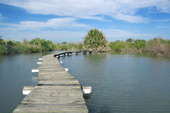 Wood made path on the water. The walkway on the water Stock Images