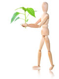 Wood man with plant Royalty Free Stock Photo