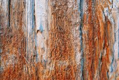 Wood for many years has lain in salt water Royalty Free Stock Photo