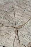 Wood materials background Royalty Free Stock Images