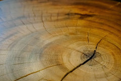 Wood modell och textur Royaltyfria Bilder
