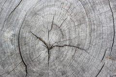 Wood modellbakgrund Arkivfoton