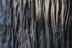 Wood modellbakgrund Royaltyfri Foto