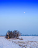 Wood and a moon winter. Serbia,Vojvodina Stock Photos