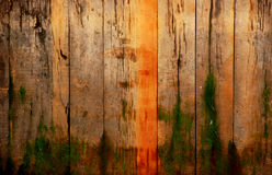 Wood with moss Royalty Free Stock Photography