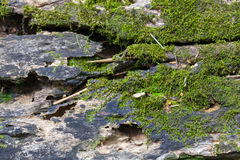 Wood with moss Stock Images