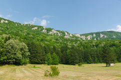 Wood and mountain. Mountains and hills around Sokobanja Royalty Free Stock Image