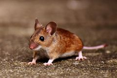 Wood mouse in wilderness