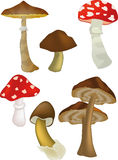 Wood mushrooms. Ingredient complete food Stock Photo
