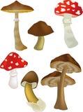 Wood Mushrooms Stock Photo
