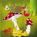 Wood mushrooms. Small snail the scientist and a mushroom a fly agaric Royalty Free Stock Image