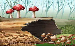 A wood with mushrooms Royalty Free Stock Photo