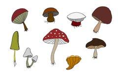 Wood mushrooms set Stock Image