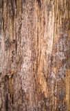 Wood background natural Royalty Free Stock Image