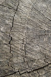 Wood. The natural old tree, with a cross cut Royalty Free Stock Image
