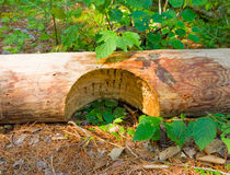 Wood notched for the building of a log cabin Royalty Free Stock Images