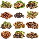 Wood nut Stock Images