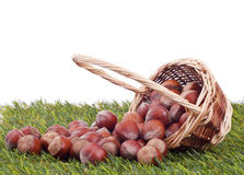 Wood nut in a basket Royalty Free Stock Photos