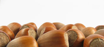 Wood nuts Stock Images