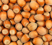 Wood nuts Royalty Free Stock Images