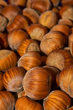 Wood nuts - a filbert Royalty Free Stock Photo