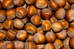 Wood nuts - a filbert. Fresh nuts - a filbert, beautiful prompt Royalty Free Stock Image
