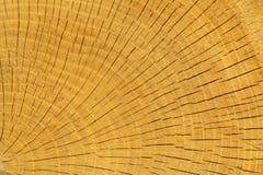 Wood oak Royalty Free Stock Photos