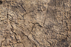 Wood. Old wood surface in sun Royalty Free Stock Photos